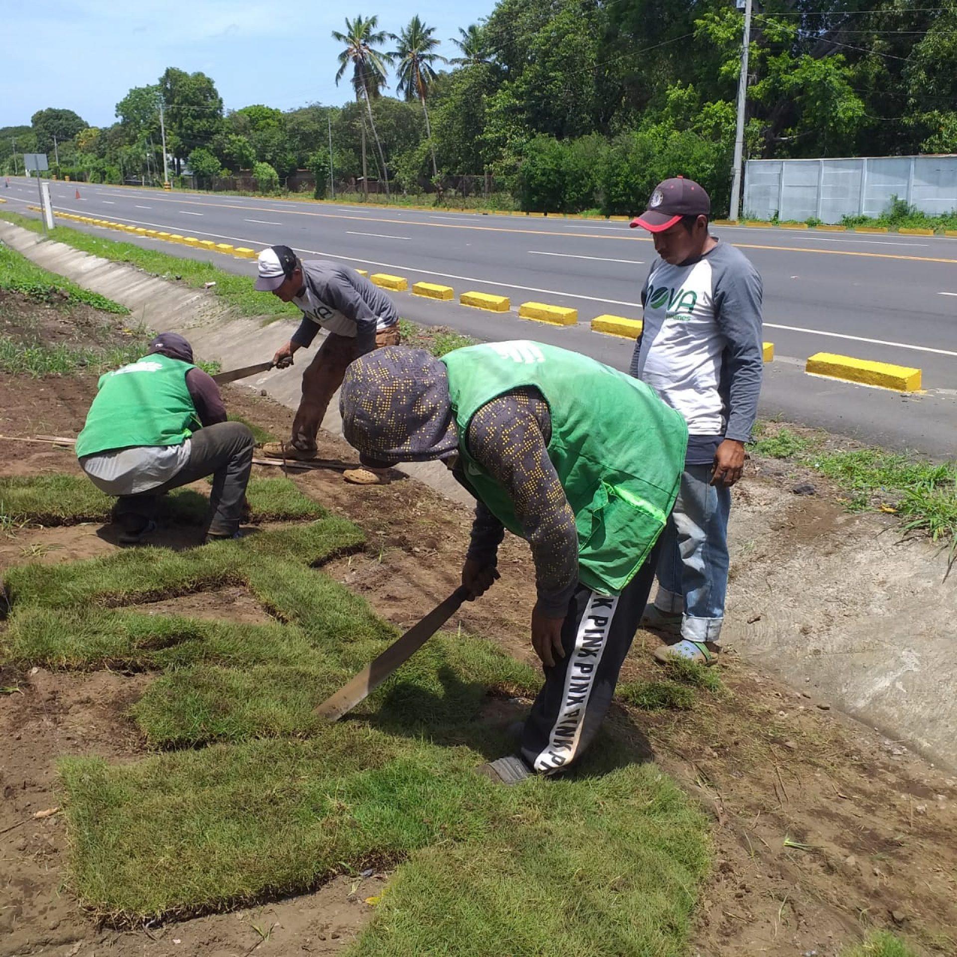 Instalación de grama por Nova Jardines